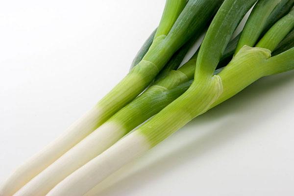 ネギ 画像1 野菜の素材 無料写真素材 印刷広告デザイン素材「花ざかりの森」
