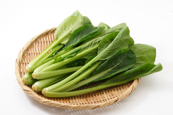 コマツナ(小松菜)野菜 画像 無料写真素材