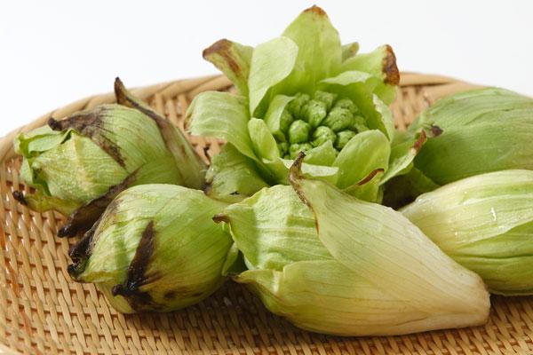 フキノトウ 山菜 食材 画像 無料写真素材 フリー写真素材