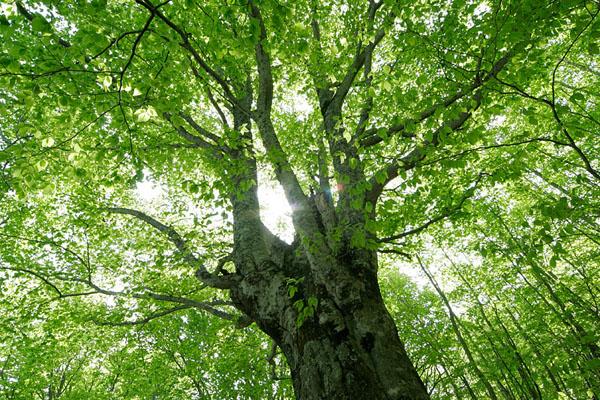 「大木 フリー素材」の画像検索結果